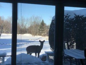 erg studio, deer in snow